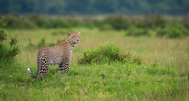 Angama Mara by Willie Carballo